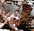 System Lets Grape Growers Rest Easy